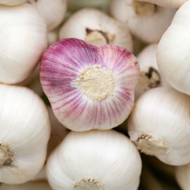 Garlic Facts and Hacks